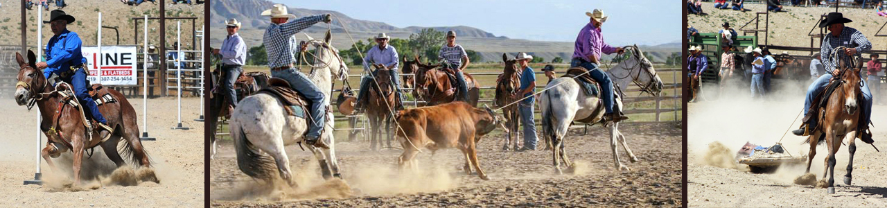mule days, Jake Clark, mule, mule rodeo, mule roping