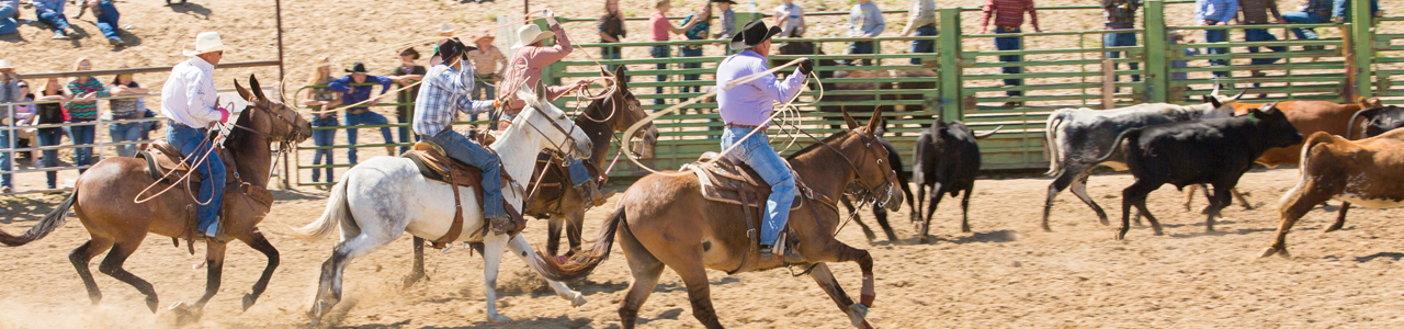 Jake Clark, Mule Days, rodeo