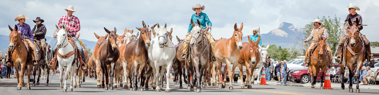 Jake Clark, Mule Days, parade, rodeo, mule, mules